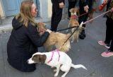 Όλο το σχέδιο των φιλοζωικών οργανώσεων της Πάτρας για τα αδέσποτα ζώα