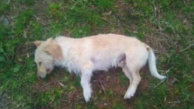 Ηλεία: Θανάτωσε με δηλητήριο 11 σκυλιά!