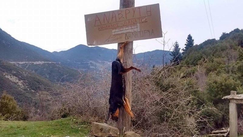 Ορεινή Ναυπακτία: Σοκαριστικές φωτογραφίες - Κρέμασε σκύλο σε κολόνα