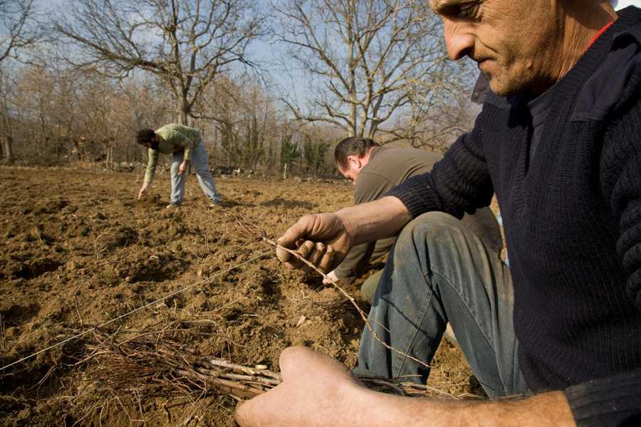 Όταν η υπεραξία των αγροτικών προϊόντων μένει στην ελληνική γη
