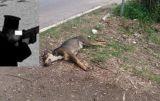 Πάτρα: Παπάς πυροβόλησε και σκότωσε σκυλιά