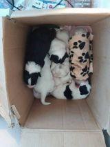 Πάτρα: «Πέταξαν» δώδεκα κουταβάκια σε κάδο απορριμάτων!