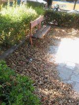 Τα φύλλα «κάλυψαν» τη Πλατεία Οξύλου στο Κεφαλόβρυσο