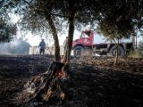 Πυρκαγιές Ηλείας: Σε ετοιμότητα για αναζωπυρώσεις η Πυροσβεστική- Ρίχνουν νερό στα δάση που σώθηκαν