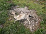Αναβλήθηκε η δίκη του υπευθύνου της επιχείρησης με τα κουφάρια ζώων