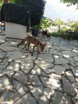 Καθημερινός επισκέπτης σε σπίτι μια... αλεπού που περιμένει το σπιτικό της φαγητό