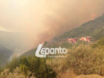 Ναυπακτία: Πυρκαγιά στο Μολύκρειο - ΔΕΙΤΕ ΦΩΤΟ & ΒΙΝΤΕΟ