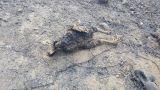Φωτιές Δυτικής Αχαϊας: Καμμένα ζώα - Εικόνες που σοκάρουν