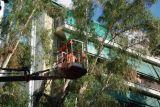 Πάτρα: Συνεχίζεται το κλάδεμα δέντρων
